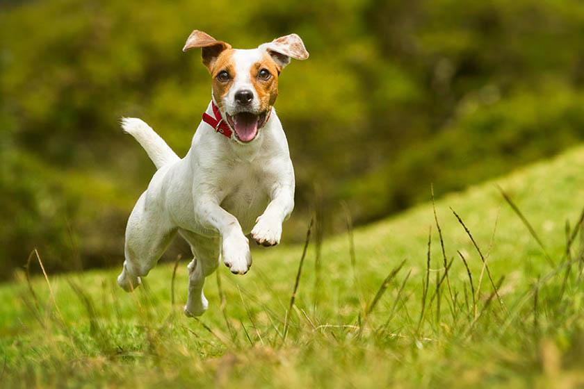 Remedios caseros para tener a tu perro libre de parasitos
