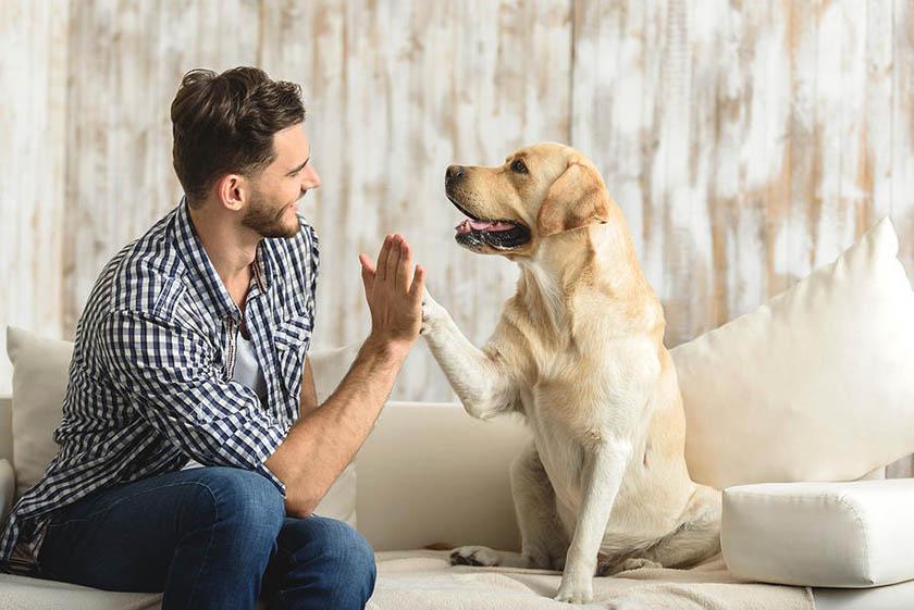 10 cosas que a tu perro no le gustan y debes evitar a toda costa (Segunda Entrega)