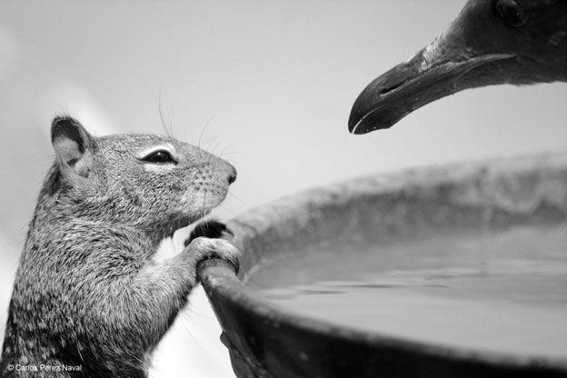 En esta imagen una marmota y una gaviota compiten por un cuenco de agua. Fue tomada en la playa en California, Estados Unidos, por Carlos Pérez Naval, un niño español finalista en la categoría de menores de 10 años. Carlos estaba allí de vacaciones cuando presenció el intercambio de miradas entre estos dos animales. Sacó la foto justo antes de que la gaviota amenazara a la ardilla terrestre que salió inmediatamente corriendo.