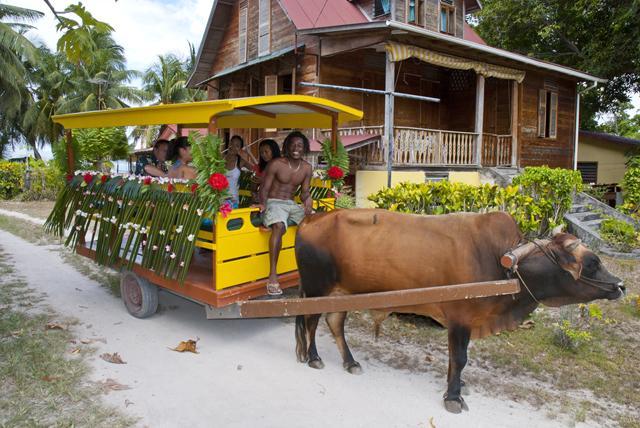 39- Buey Taxi