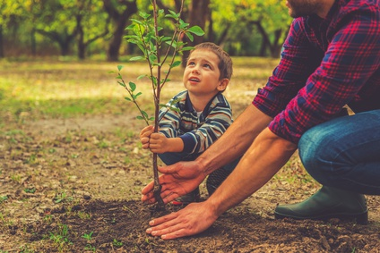 When will it grow? Curious little boy helping his father to plant the tree while working together in the garden