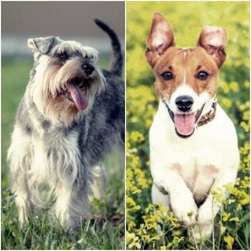 Perros para Aries